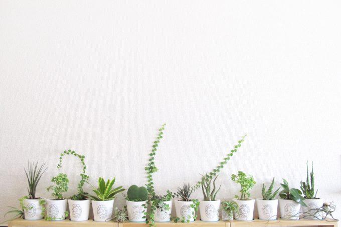 子宝風水で寝室に観葉植物を置く理由
